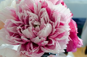 make-your-very-own-paper-flowers