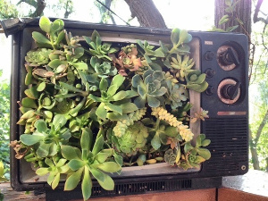 TV Planter