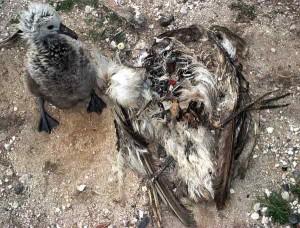 trashmageddon kills the birds