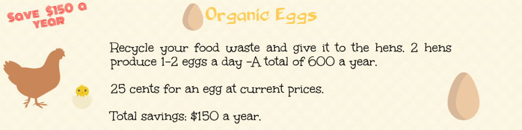 recycle food waste for money by growing hens for organic eggs